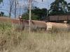umhlali-compensation-station-d148-s-29-30-569-e31-11-479-elev-86m-3