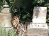 umhlali-methodist-cemetary-a-m-ritchie