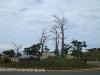Izinga Ridge entrance Baobab (1)