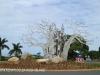 Izinga Ridge entrance Baobab (4)