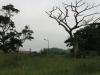 umhlanga-new-town-centre-umhlanga-ridge-boulevard-views-open-space-6