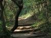 Hawaan Nature  Reserve - trails (7)