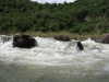 Umkomaas River - Hella Hella - No 1 approaches rapids  (2)