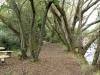 Drakensberg Gardens - River walk (2)