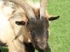 Drakensberg Gardens - animal farm (1)
