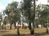 van-reenen-park-2
