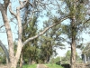 Verulam Cemetery grave  pathway