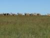 vryheid-hill-nature-reserve-eland-s-27-45-14-e-30-47-38