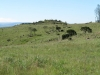 vryheid-hill-nature-reserve-north-gun-site-signal-hill-s-27-44-32-e-30-47-33-elev-1464m-2