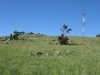 vryheid-hill-nature-reserve-north-gun-site-signal-hill-s-27-44-32-e-30-47-33-elev-1464m-5