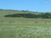 vryheid-hill-nature-reserve-s-27-45-14-e-30-47-33