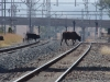 waschbank-rail-lines-s28-18-766-e-30-06-175-elev-1070m-43