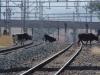 waschbank-rail-lines-s28-18-766-e-30-06-175-elev-1070m-44