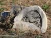 WEENEN-Cemetery-grave-MRE-Grie....-226