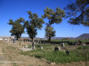 WEENEN-Cemetery-grave-views-206