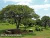 Weenen Nature Reserve Centenary Park 1938 sanctuary 28.50.42 S 30.1.37 E (10)
