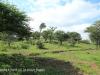 Weenen Nature Reserve Onverwacht farm Coetzee 1862 28.51.39 S 29.59.38 E (1)