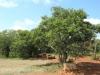 Weenen Nature Reserve Picnic site  Umtunzini  28.52.51 S 30.1.29 E (50)