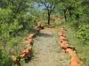 Weenen Nature Reserve Picnic site  Umtunzini  28.52.51 S 30.1.29 E (54)