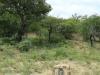 Weenen Nature Reserve Umkombe Cottage 28.51.35 S 29.59.49 E (6)