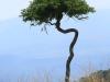 Weenen Nature Reserve acacias (1).