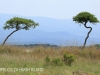 Weenen Nature Reserve acacias (2).