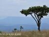 Weenen Nature Reserve acacias (2)