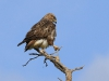 Weenen Nature Reserve eagle (6)