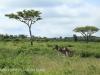 Weenen Nature Reserve zebra (2)
