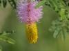 Zimanga Flowers (7)