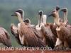 Zimanga Scavengers Hide Vultures (2)