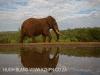 Zimanga overnight hide - Elephant tusker
