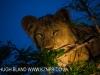 Zimangas Tree Lions  (7)