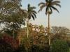 Bethany Farm - Farmhouse - Hagemann family - gardens (2)