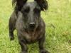 Bethany Farm - The farm dog