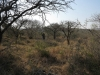 koningskroon-dorstfontein-farm-ft-victoria-1879-s-28-25-53-e-31-18-57-elev-73-13
