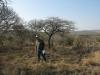 koningskroon-dorstfontein-farm-ft-victoria-1879-s-28-25-53-e-31-18-57-elev-73-14