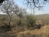 koningskroon-dorstfontein-farm-ft-victoria-1879-s-28-25-53-e-31-18-57-elev-73-15
