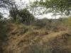 koningskroon-dorstfontein-farm-ft-victoria-1879-s-28-25-53-e-31-18-57-elev-73