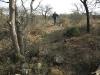 koningskroon-dorstfontein-farm-ft-victoria-1879-s-28-25-53-e-31-18-57-elev-731m-12