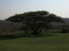 koningskroon-dorstfontein-farm-house-s28-25-928-e-31-19-1