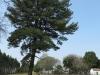 manzini-estates-zulu-war-graves-cpl-w-cotter-17th-lancers-lt-h-s-douglas-adjacent-house
