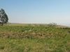 mthonjaneni-fort-3-post-ulundi-invasion-s-28-28-32-e-31-20-2