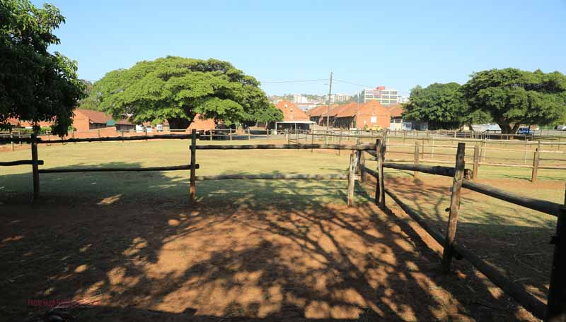 Newmarket stables