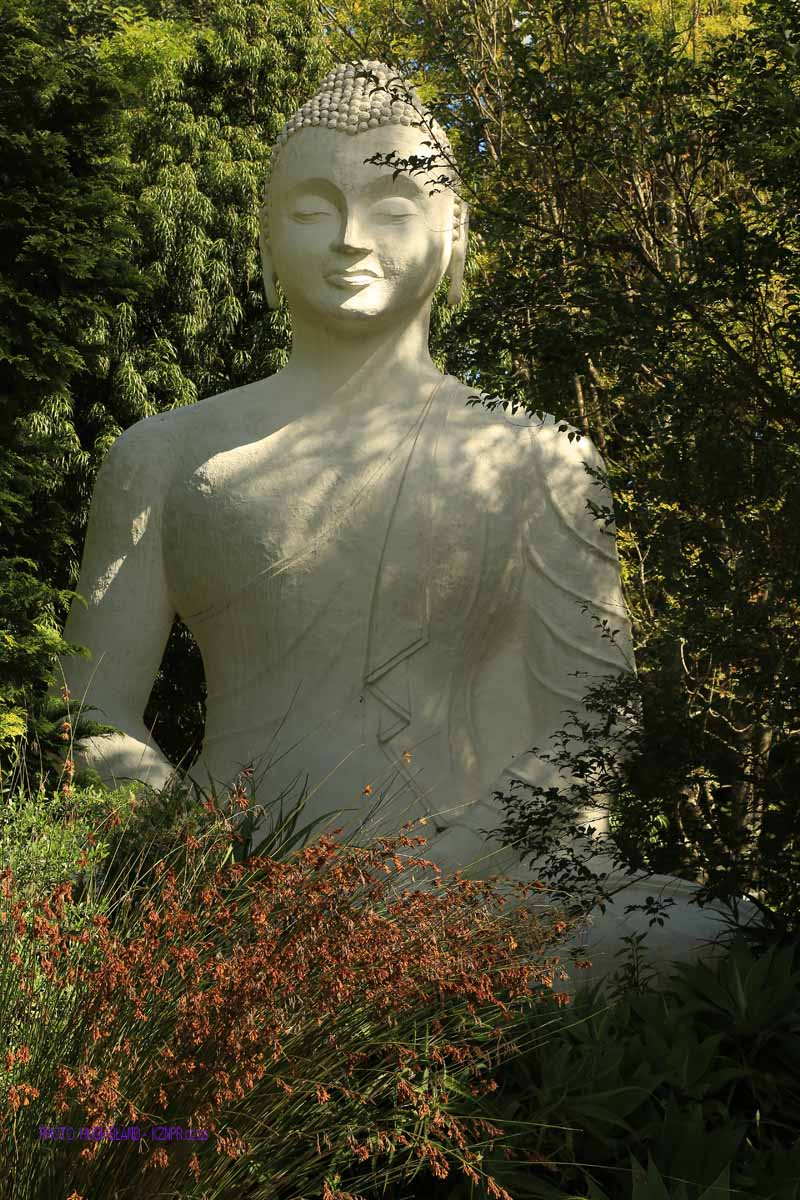 Ixopo Buddist Retreat - Budda staue in gardens (3)