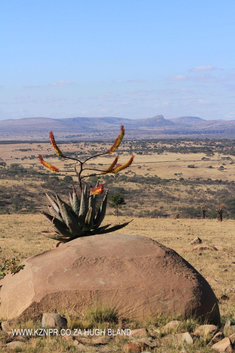 rorkes-drift-lodge-views-towards-isandlwana-10