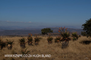 rorkes-drift-lodge-views-towards-isandlwana-hiking-view-4