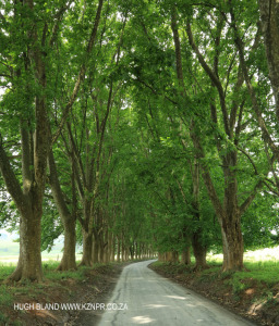 Richmond - Beaulieu Farm -farm road leading to homestead (6)